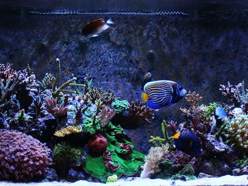 reefkinetics-aquarium.jpeg